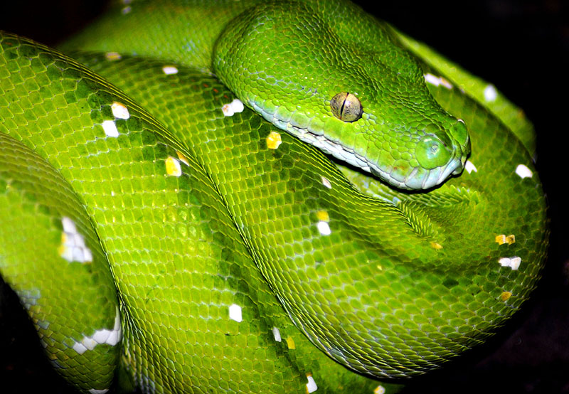 an introduction to snakes Learn all about the bolivian kallawaya, a traditional healer who cures with a variety of exotic remedies.