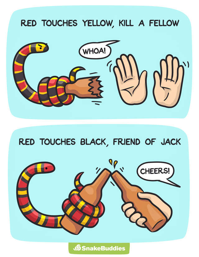 Red Black Snake Saying
