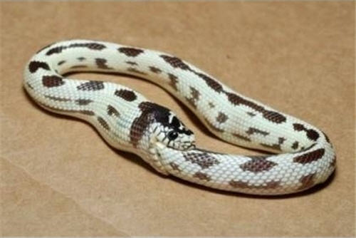 Weird Snakes!   Snake Buddies