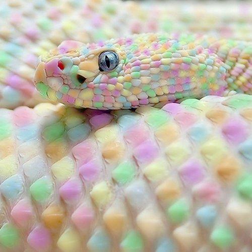 photoshop snake