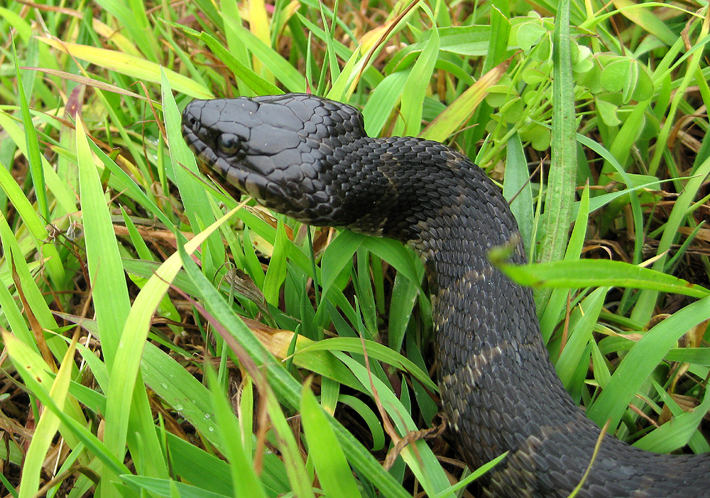 Is this Snake Venomous? What to Look for when Dealing with Snakes ...