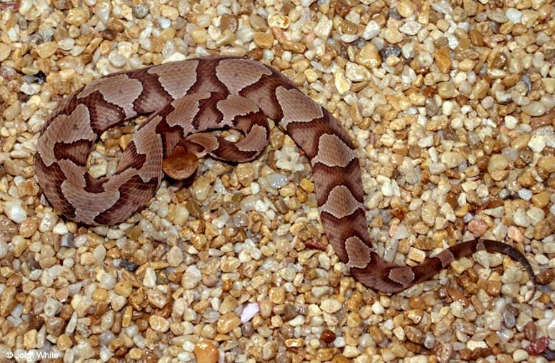Is this snake venomous what to look for when dealing with