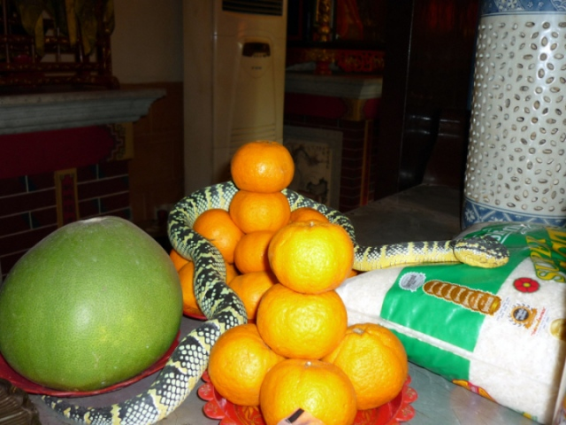 Snake Temple offerings of rice, oranges and melons.