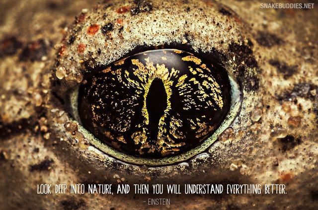 Toad Eye Wallpaper - Einstein Quote