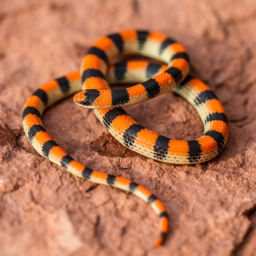 Variable Ground Snake by Eric Gofreed