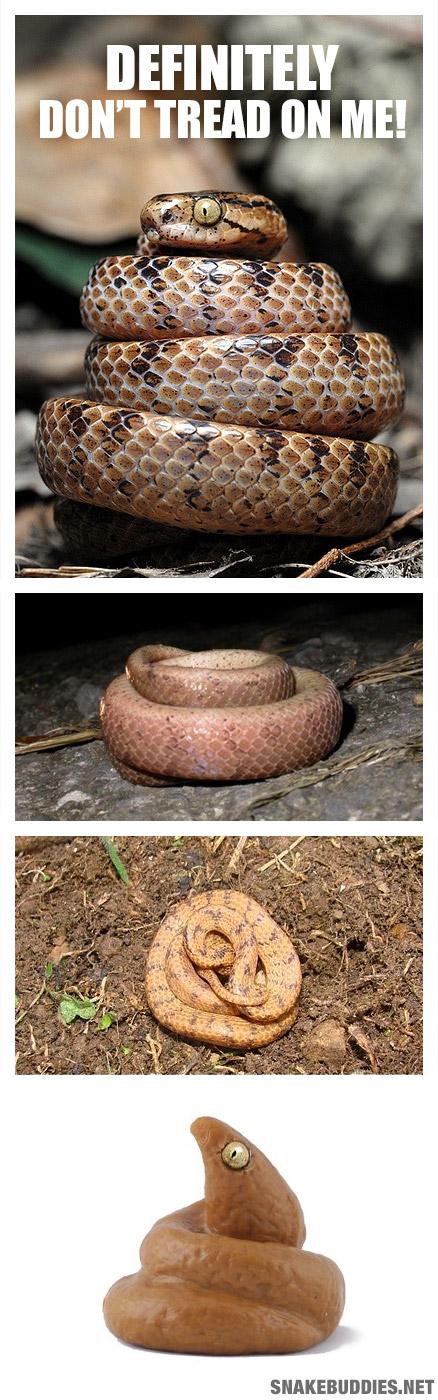 Formosa Slug Snake - Poo Mimic
